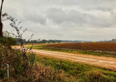 IMG 9343 - Photo Gallery: A Mississippi Delta Pilgrimage
