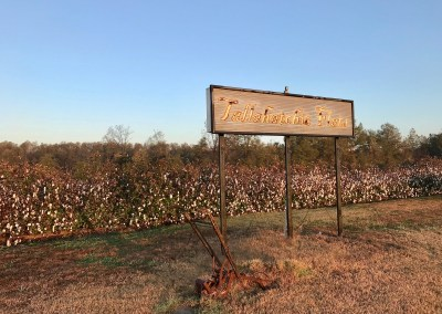 IMG 9407 - Photo Gallery: A Mississippi Delta Pilgrimage