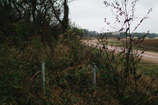 MississippiDeltaEmmettTill BackroadPlanet AshleighColeman 75 - Searching for Emmett Till: A Mississippi Delta Pilgrimage