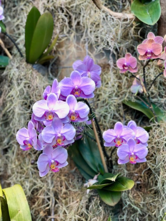 orchids - Find Fun and Laughter in Upstate New York