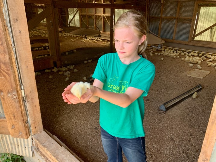 Polyface Farm Lauryn Chick - Fun Things to Do in Staunton Virginia
