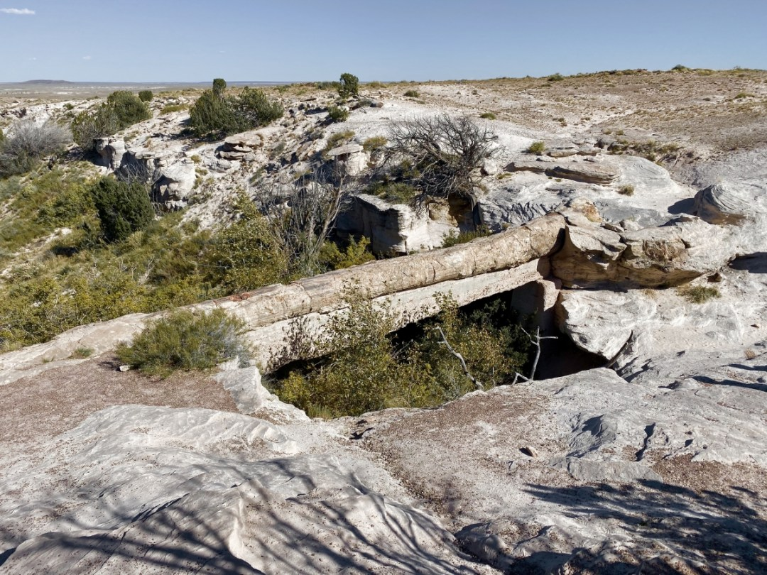 Agate Bridge Petrified Forest NP - Drive the Painted Desert & Petrified Forest National Park