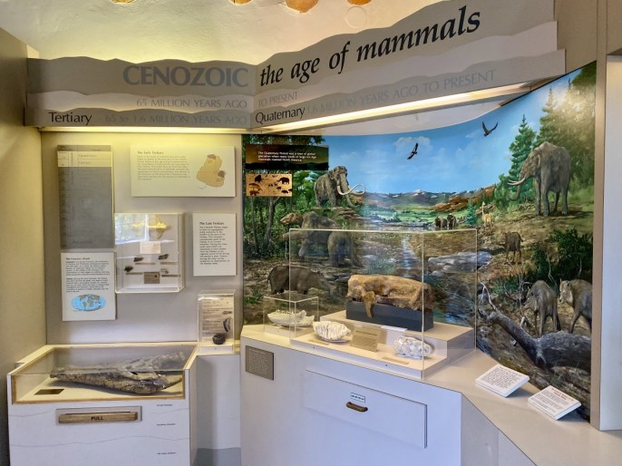 Cenozoic Exhibit - Tour Flagstaff Attractions On Your Own