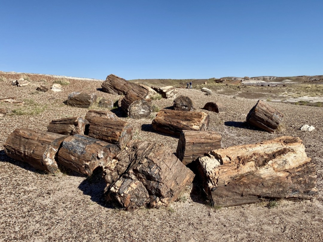 Crystal Forest logs - Drive the Painted Desert & Petrified Forest National Park