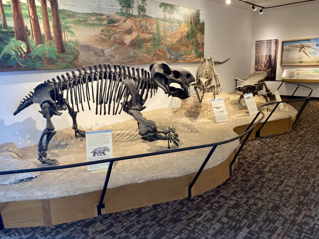 Rainbow Forest Museum - Drive the Painted Desert & Petrified Forest National Park