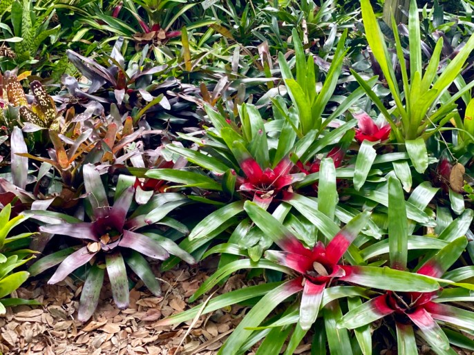 bromeliads - Discover Lake County Florida Outdoor Adventures