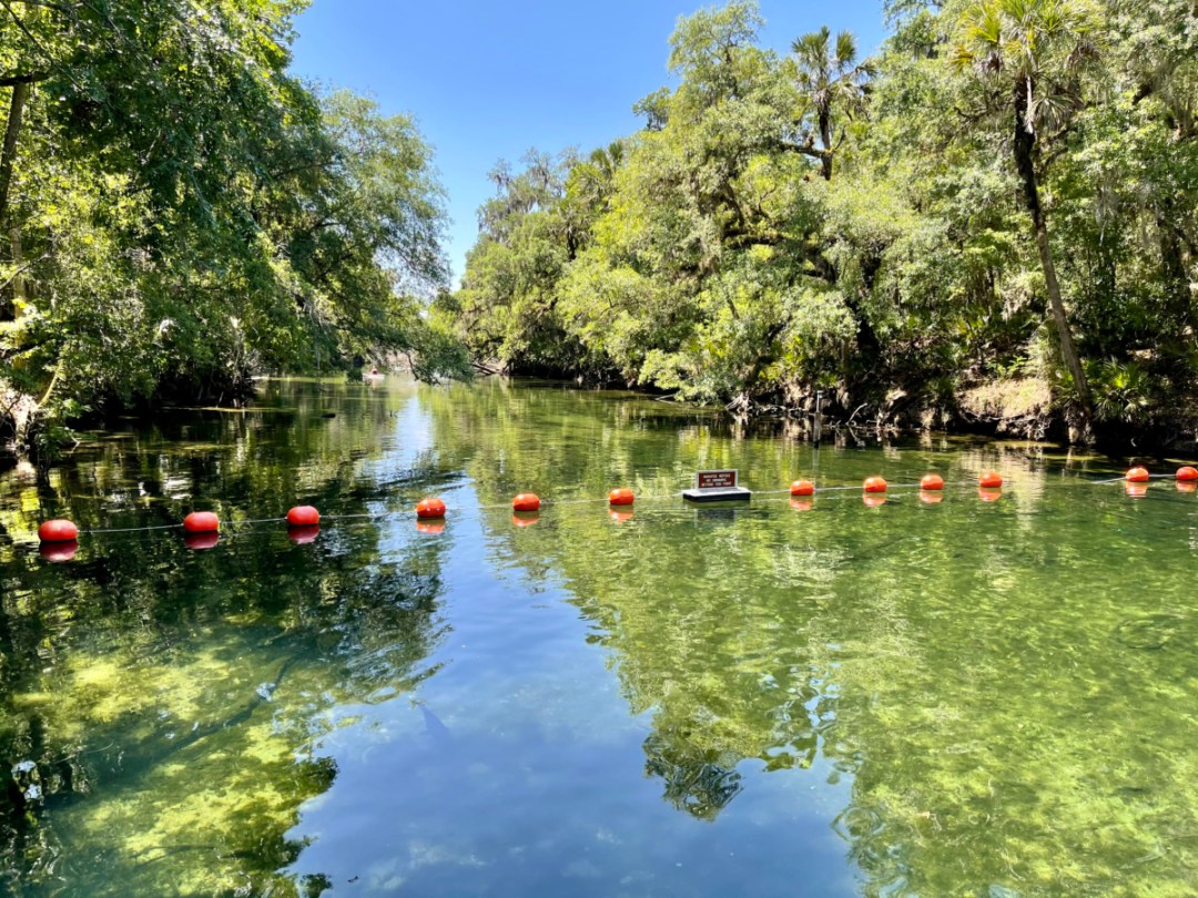 Blue Spring Run swimming area - Discover Florida's Blue Spring State Park & Campground