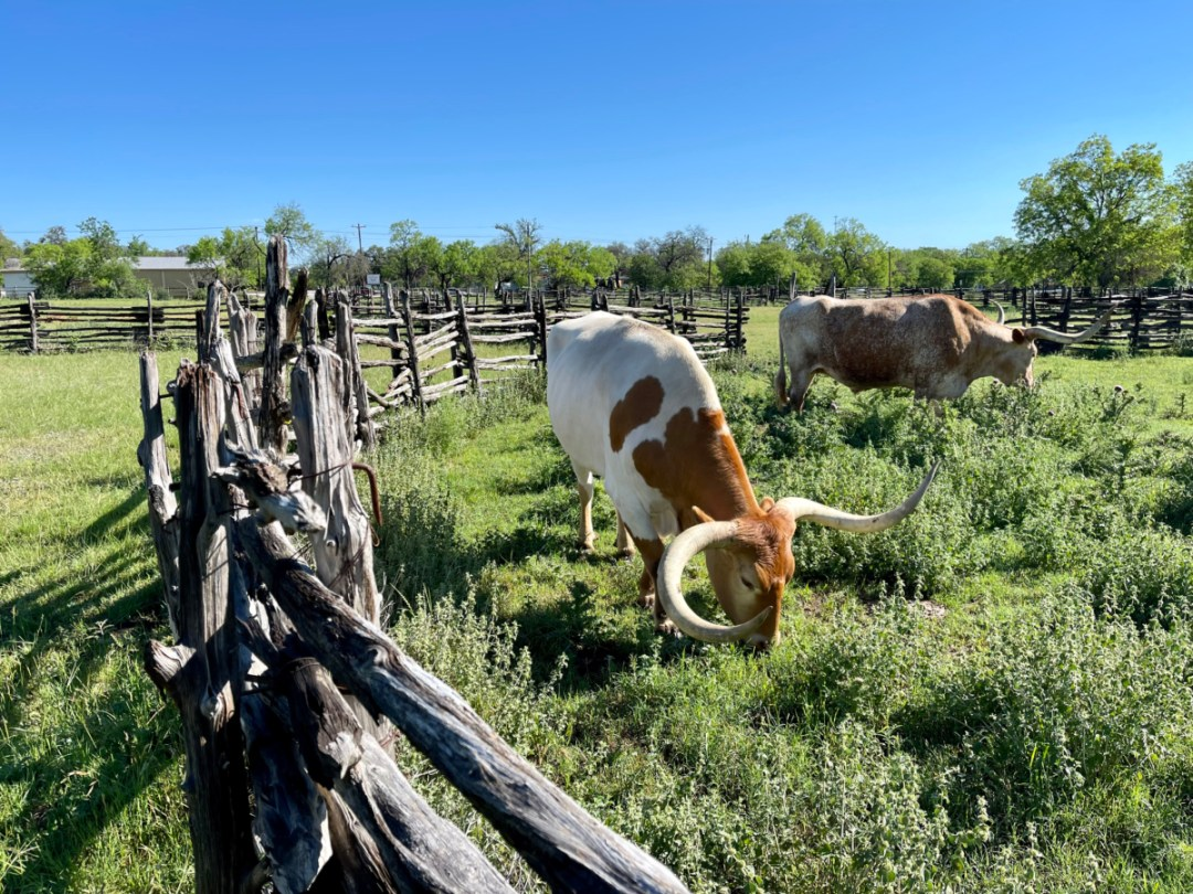 Texas Longhorns - Explore LBJ Ranch and the Texas Hill Country
