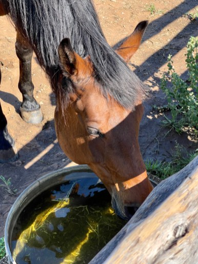 horse at Johnson Settlement - Explore LBJ Ranch and the Texas Hill Country