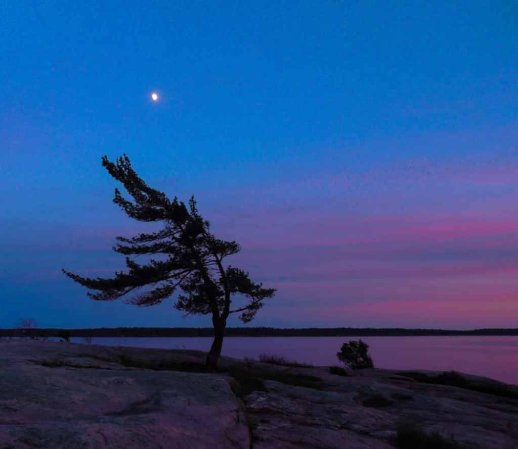 A lonely tree on the shores of Lake Ontario