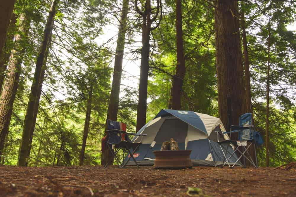 Magic in the Redwoods: Jedediah Smith State Park