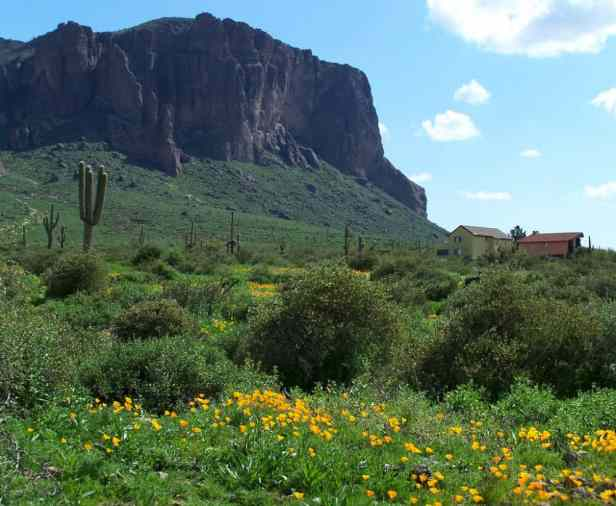 Wildflower Hikes Arizona