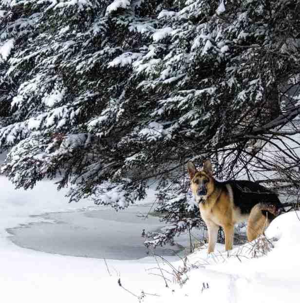 Winter Photo Inspiration