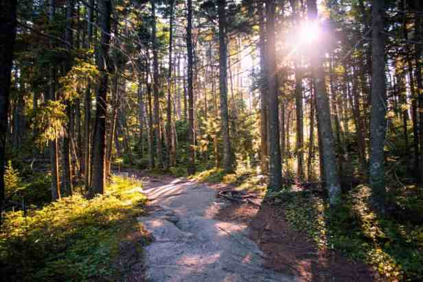A sunset view of the summit trail in Ascutney State Park. Best hikes for kids in southern Vermont