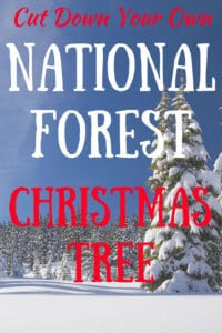 A snowy forest with the caption: Cut Down Your Own National Forest Christmas Tree