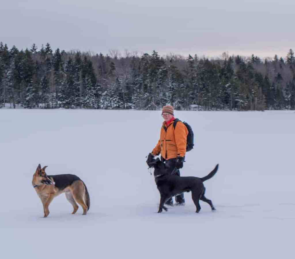 A woman in an orange coat walks through the snow with a German Shepherd and a black lab.