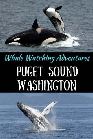 """Two photos - one of a killer whale, the other of a humpback whale, with the caption """"whale watching adventures in Puget Sound, Washington"""""""