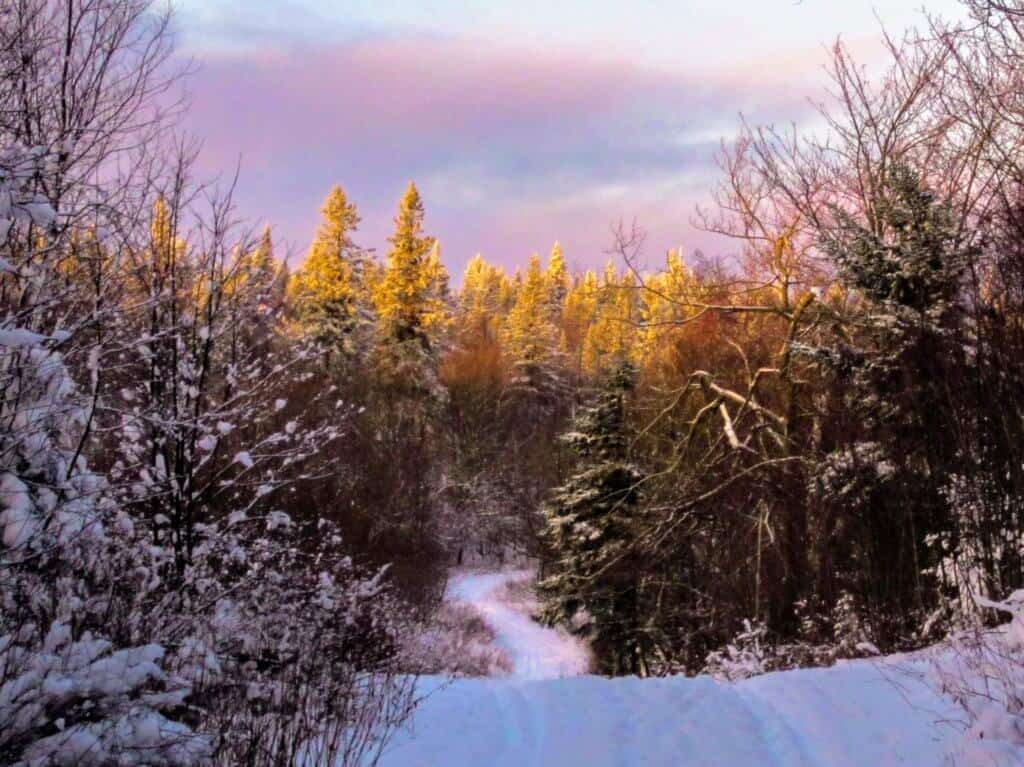 A snowy scene in the Green Mountain National Forest of Vermont
