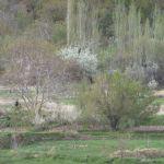 15_04_16-Iran_2-083