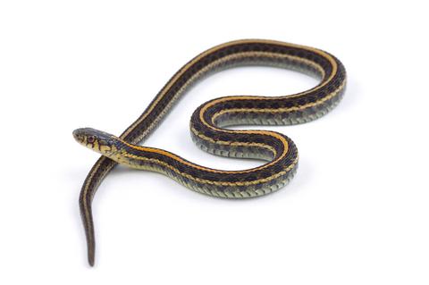 Snakes For Kids