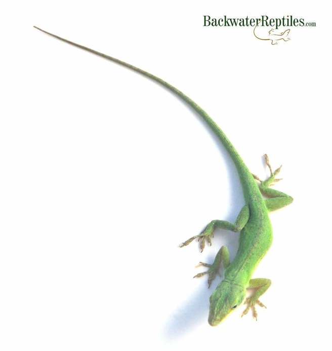 Backwater Reptiles Blog - Page 2 of 20 - Over 250 Articles