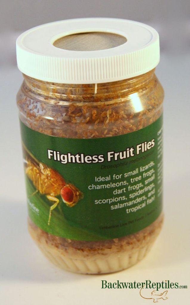 melanogaster fruit flies