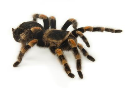 most popular poisonous/venomous pets