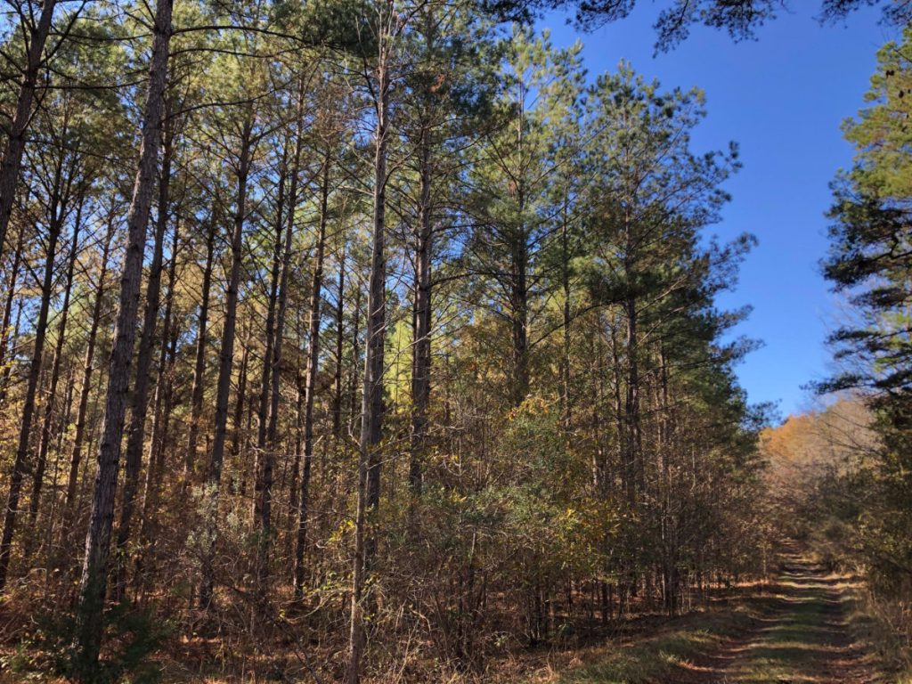 holmes county timber land for sale