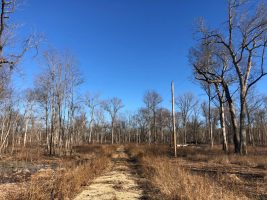hunting land for sale sharkey county ms