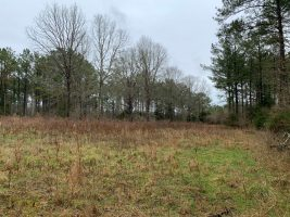 attala county ms timberland for sale