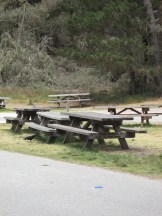 Picnic area at Point Lobos