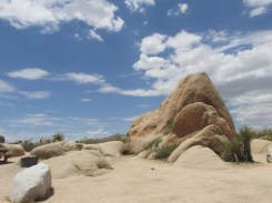 12 - joshua-tree-national-park
