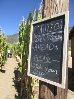 2 - oak_glen_california_corn_maze
