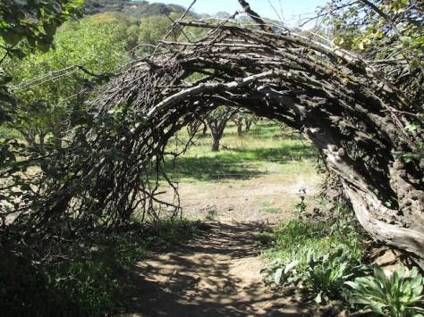 4 - wildlands_conservancy_oak_glen_california