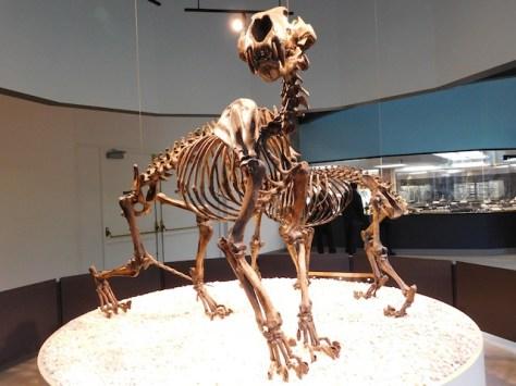 Naegele's giant jaguar