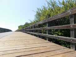 upper_newport_bay_nature_preserve_orange_county11