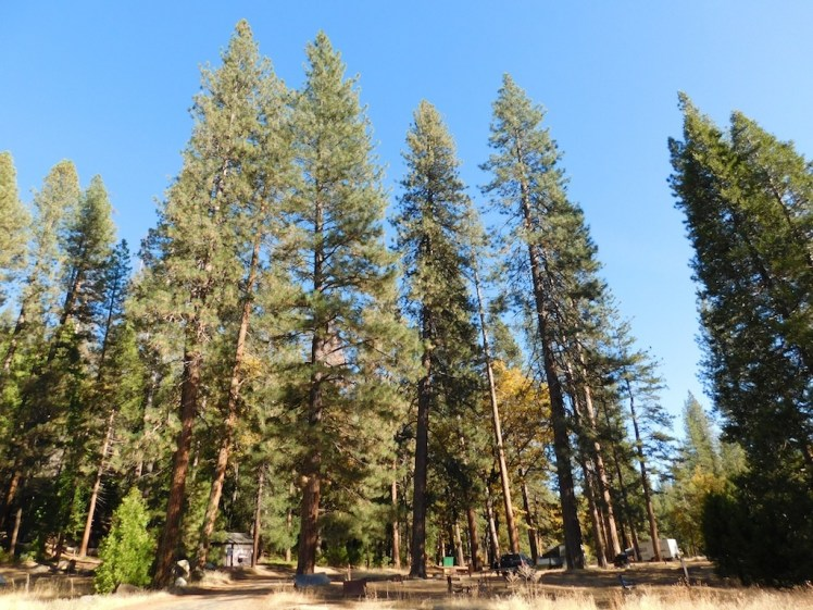 3-wawona-campground-yosemite