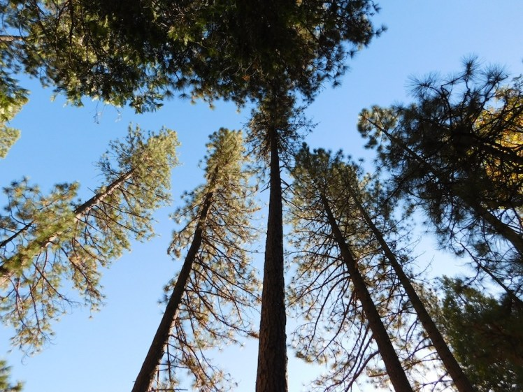 4-wawona-campground-yosemite