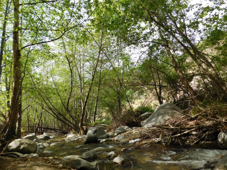 Eaton Canyon Falls hike