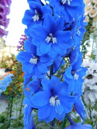 31-flower-fields-carlsbad-ranch
