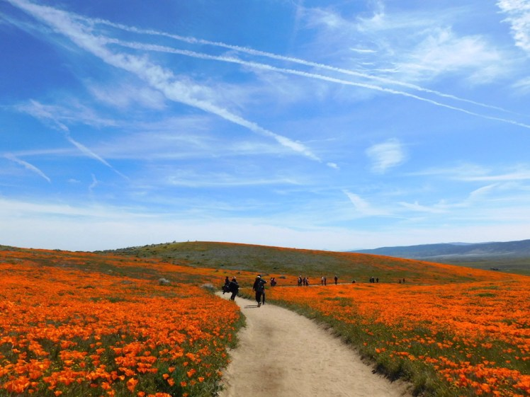 Antelope Valley Poppy Reserve, super bloom 2019
