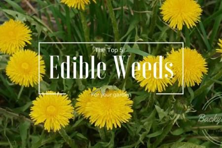 The Top 5 Weeds to grow