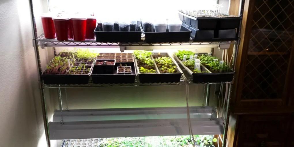 How to start seeds indoors, grow light setup, grow room, grow rack, seed starting shelf