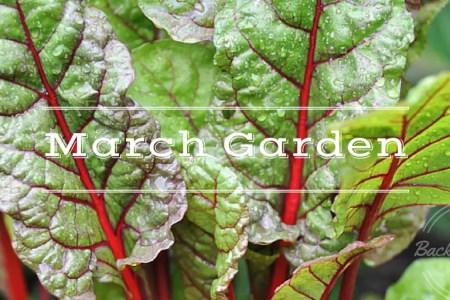 March Garden, growing your own, backyard homestead, backyard garden