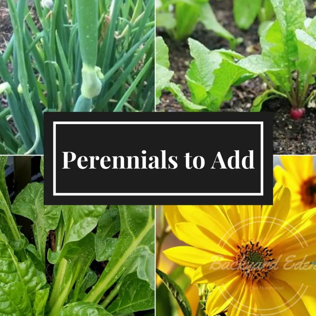 Perennials to add to your garden, Perennials, Grow perennials, Backyard Eden, www.backyard-eden.com