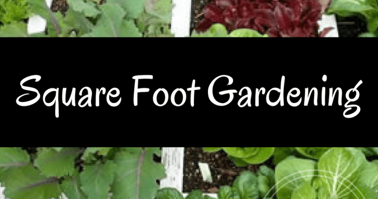 How to Start Square Foot Gardening