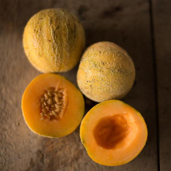 Minnesota Midget Melon