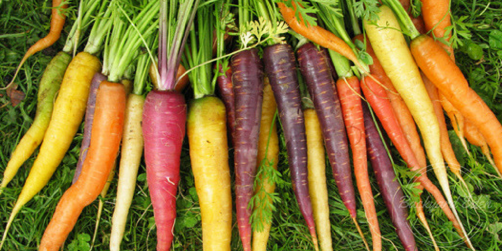 How to Grow Carrots, Carrots, How to Grow, Urban Farmer, Backyard Eden, www.backyard-eden.com