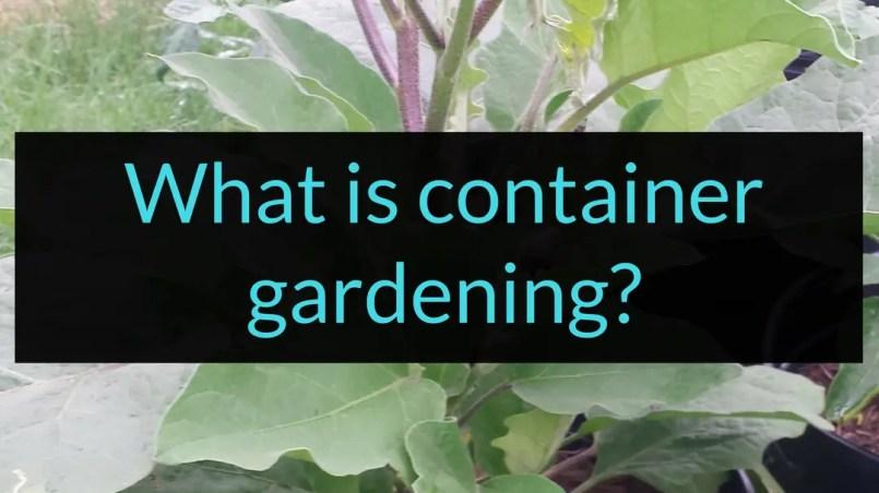 What is container gardening, container gardening, Backyard Eden, www.backyard-eden.com