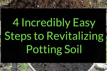 4 Incredibly Easy Steps to revitalizing potting soil, re-use potting soil, Backyard Eden, www.backyard-eden.com, www.backyard-eden.com/revitalizing-potting-soil